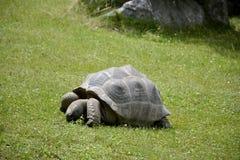 Details van de wilde schildpad van de Galapagos royalty-vrije stock afbeelding