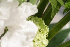 Details van een witte bloem met de close-up van waterdalingen stock fotografie