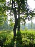 Details van gesilhouetteerde bomen Stock Foto
