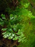 Details van Hawaï groene varen Royalty-vrije Stock Afbeeldingen