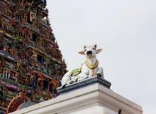 Details van Indische Kapaleeswarar-tempel, Chennai, India Royalty-vrije Stock Afbeeldingen
