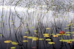Details van vijver in de herfst Stock Foto's