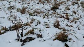 Details von Winterwiesen stock video footage