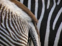 Details von Zebra lizenzfreie stockfotos