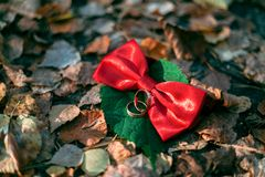 Details wedding rings leaves autumn Royalty Free Stock Images
