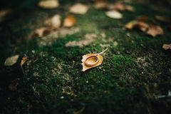 Details wedding rings leaves autumn. Nature sun Royalty Free Stock Photos
