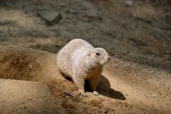 Details from wild prairie dogs Stock Photo