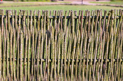 Details of the wooden vine fence in the village. Lithuania Stock Images