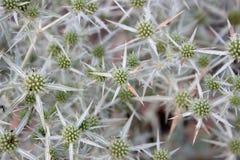 Detailtextuur van droge bloemen Royalty-vrije Stock Foto