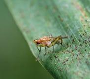 detal closeup för flugakrypmakro arkivbild