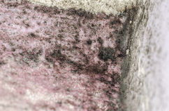 Detal of mold and moisture buildup on pink wall Royalty Free Stock Photography