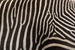 Detal van zebra Royalty-vrije Stock Afbeelding