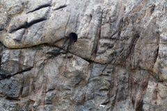 Detalhado perto acima da superfície do granito e os muros de cimento e os assoalhos imagens de stock