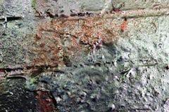 Detalhado perto acima da superf?cie da casca colorida pulverizou a pintura em muros de cimento resistidos imagens de stock royalty free
