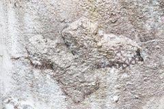 Detalhado perto acima da superf?cie de muros de cimento rachados e resistidos na alta resolu??o imagens de stock royalty free
