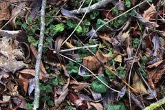 Detalhado perto acima da vista em uma terra da floresta na alta resolução fotografia de stock royalty free