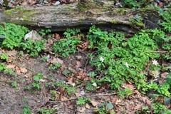 Detalhado perto acima da vista em uma terra da floresta na alta resolução fotografia de stock