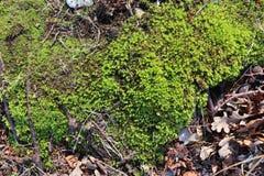 Detalhado perto acima da vista em uma terra da floresta na alta resolução imagens de stock royalty free