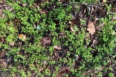 Detalhado perto acima da vista em uma terra da floresta na alta resolução foto de stock royalty free