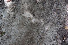 Detalhado perto acima da vista em uma terra da floresta na alta resolu??o fotografia de stock royalty free