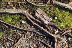 Detalhado perto acima da vista em uma terra da floresta na alta resolu??o fotos de stock