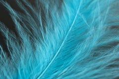 Detalhe azul das penas Foto de Stock