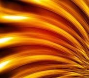 Detalhe bonito da flor do close-up Imagens de Stock Royalty Free