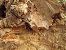 Detalhe bonito de árvore de cereja antiga Imagem de Stock Royalty Free