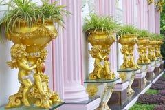 Detalhe bonito do querubim do emplastro com o scallop da folha de ouro e o carvalho l Fotografia de Stock Royalty Free