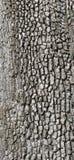 Detalhe, casca de árvore cinzenta Fotografia de Stock