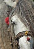 Detalhe cinzento da cabeça de cavalo Foto de Stock Royalty Free