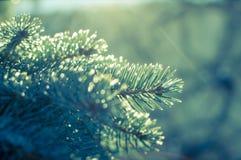 Detalhe da árvore Foto de Stock Royalty Free