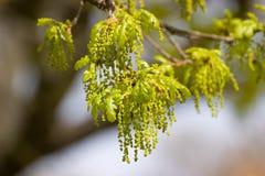 Detalhe da árvore Imagens de Stock Royalty Free