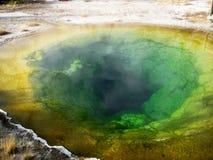 Detalhe da associação da corriola (Yellowstone) Fotografia de Stock Royalty Free