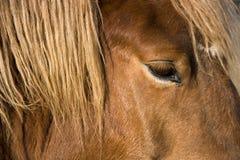 Detalhe da cabeça de cavalo Foto de Stock Royalty Free