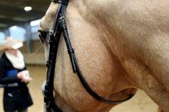 Detalhe da cabeça de cavalo da pele de gamo fotografia de stock royalty free