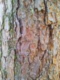 Detalhe da casca de uma árvore Imagens de Stock