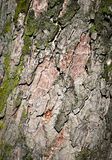 Detalhe da casca de uma árvore velha Imagens de Stock Royalty Free
