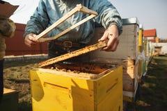 Detalhe da colmeia da abelha Apicultor Inspecting Bee Hive ap?s o inverno fotografia de stock