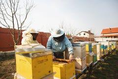 Detalhe da colmeia da abelha Apicultor Inspecting Bee Hive ap?s o inverno imagem de stock royalty free