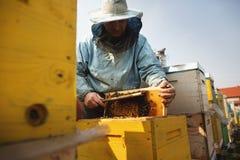 Detalhe da colmeia da abelha Apicultor Inspecting Bee Hive ap?s o inverno foto de stock royalty free