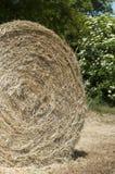 Detalhe da esfera do feno Fotos de Stock