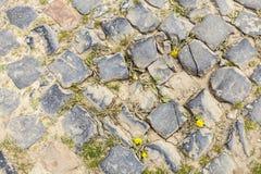 Detalhe da estrada da pedra Fotos de Stock Royalty Free