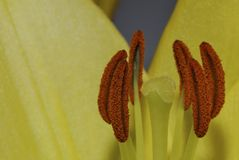 Detalhe da flor Imagens de Stock