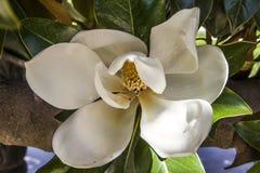 Detalhe da flor Foto de Stock Royalty Free