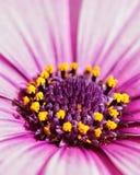Detalhe da flor Imagem de Stock