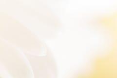 Detalhe da flor da mola Imagens de Stock