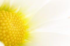 Detalhe da flor da mola Fotos de Stock