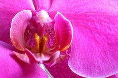 Detalhe da flor da orquídea imagens de stock
