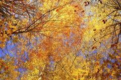 Detalhe da floresta no outono atrasado Imagens de Stock Royalty Free